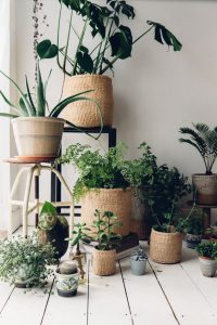 Three Interiors | House plants are having a moment....